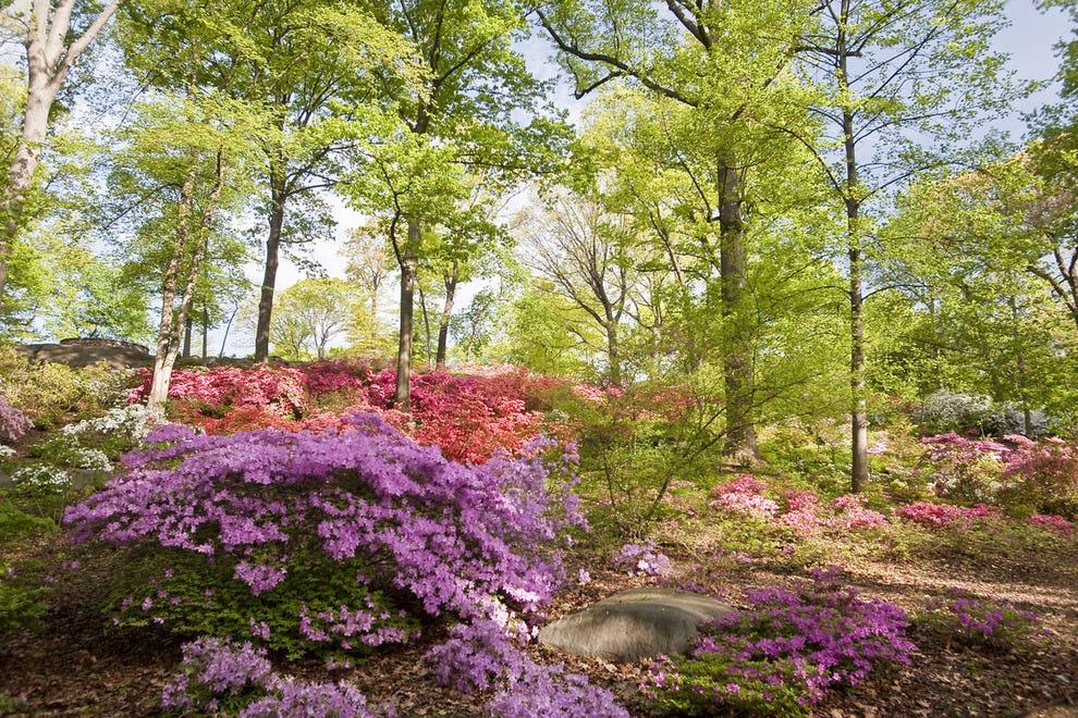 New York Botanical Garden Bronx, N.Y.