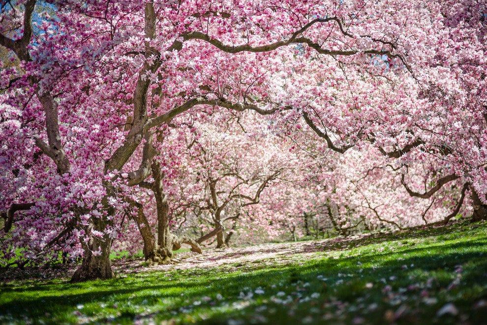 New york botanical garden new york attractions review - Restaurants near bronx botanical garden ...