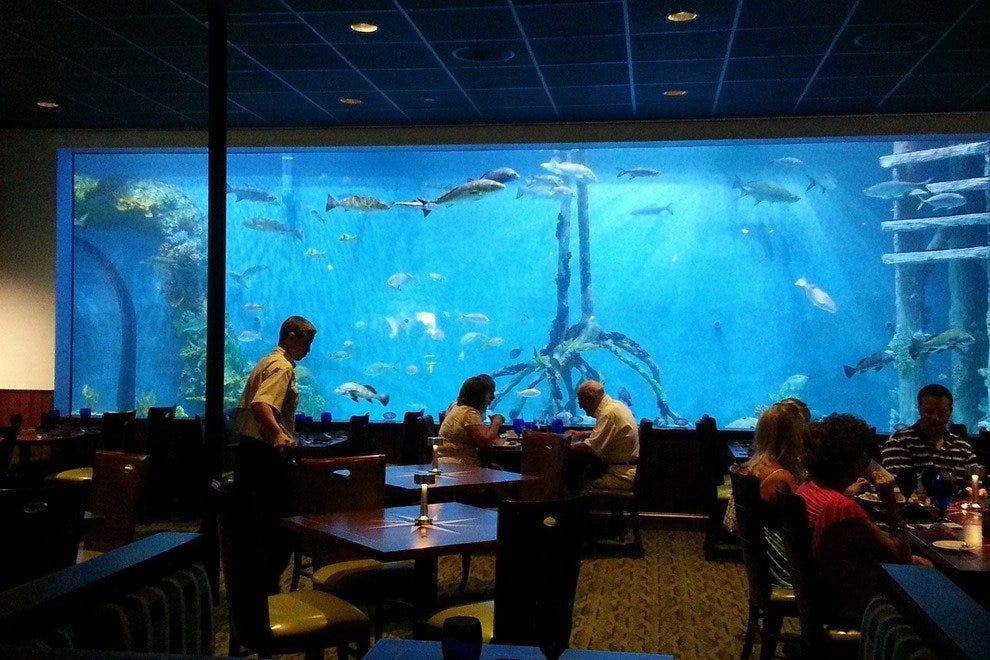 Guy Harvey S Rumfish Grill Amp Bar St Petersburg