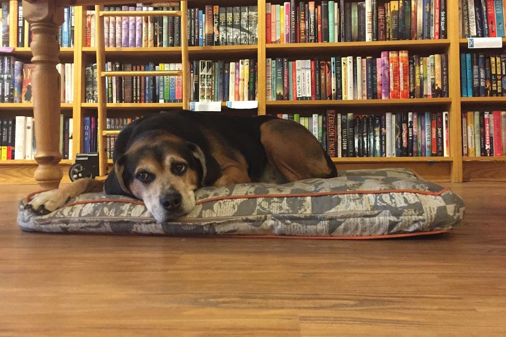 Opie, shop dog at Parnassus Books