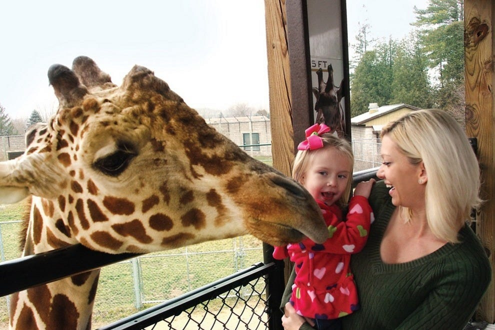 Feeding giraffes at NEW Zoo & Adventure Park