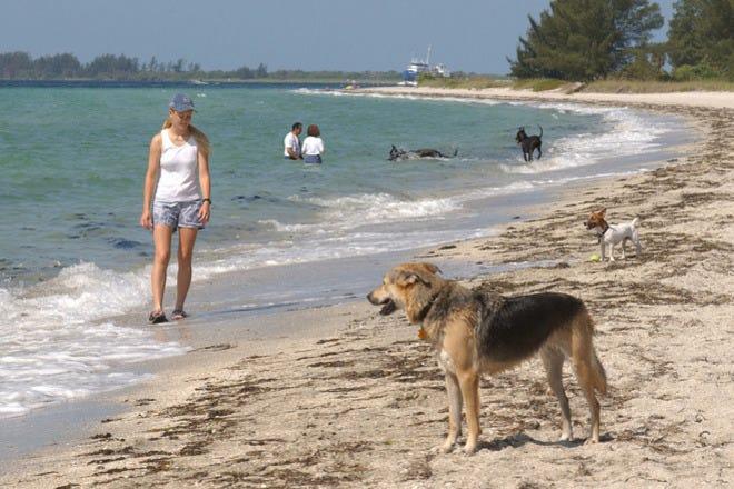 Dog Friendly Beach In Jekyll Island