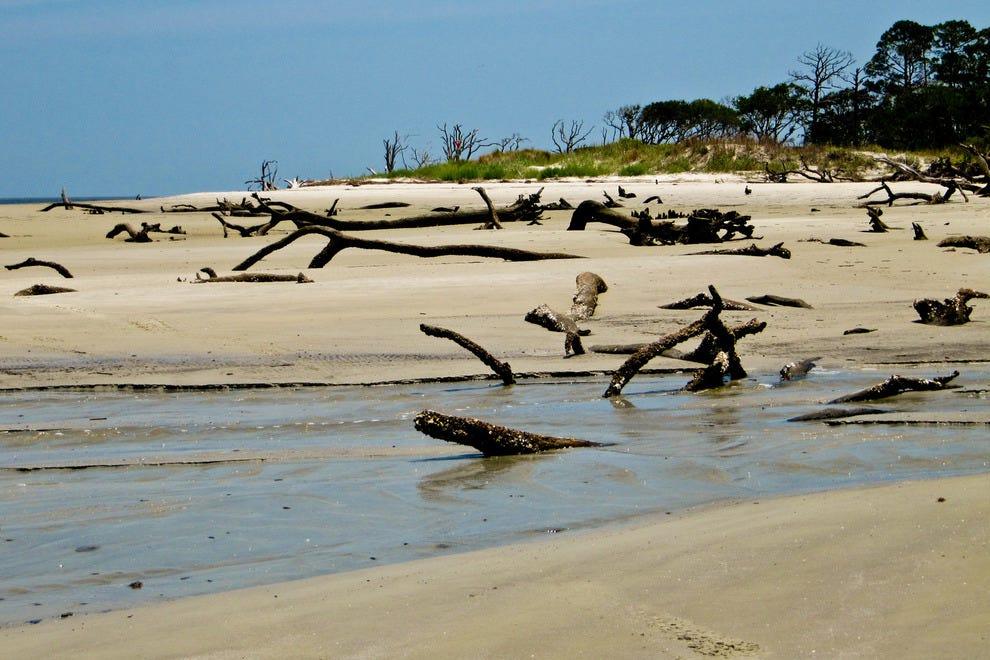 Dog Freindly Beach In Jekyll Island