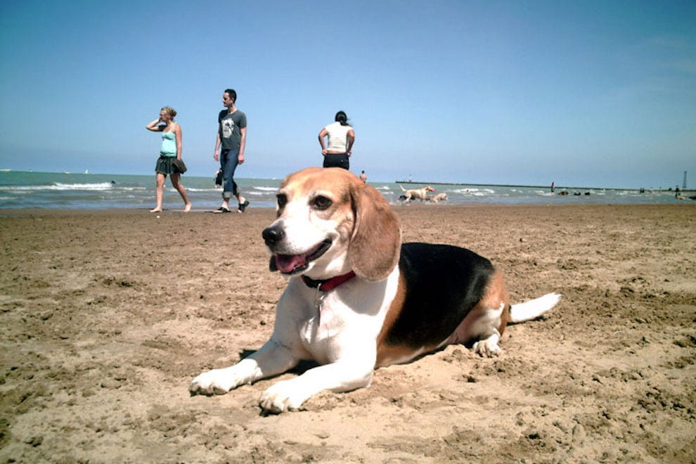Dog Friendly Attractions In Michigan