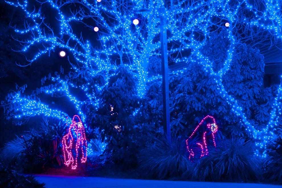 lights before christmas at the riverbanks zoo columbia sc - Toledo Zoo Lights Before Christmas
