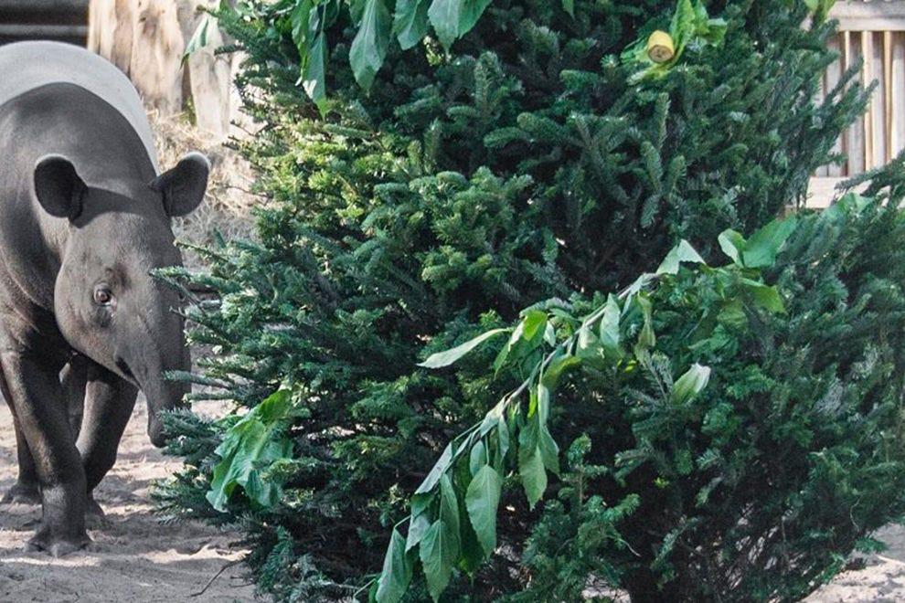 野生坦帕动物园的圣诞节