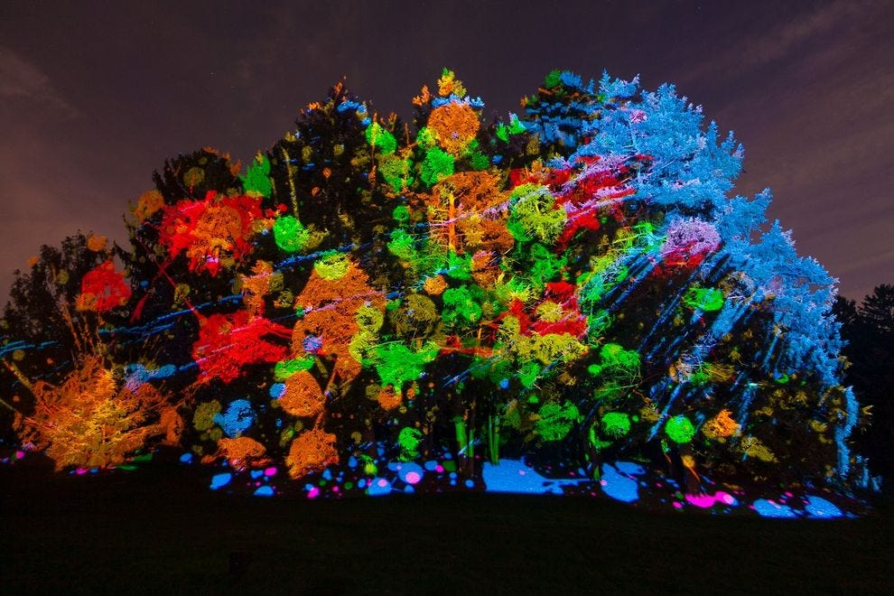 Illumination At Morton Arboretum Chicago Attractions