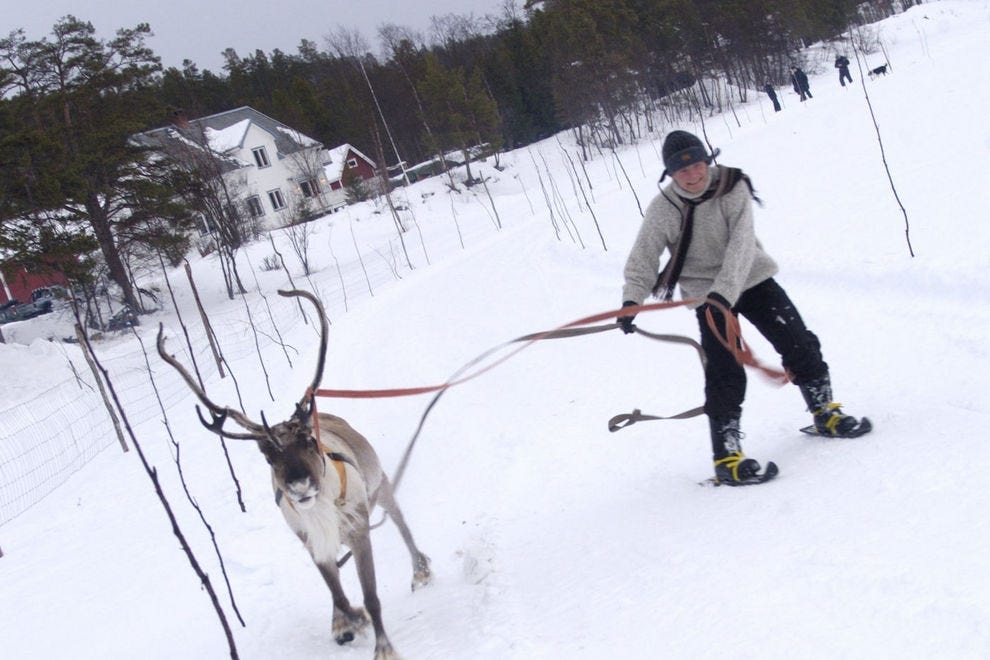 Ski with a reindeer, but don't pick one that goes at breakneck speed