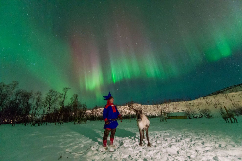 Northern Lights and reindeer, too
