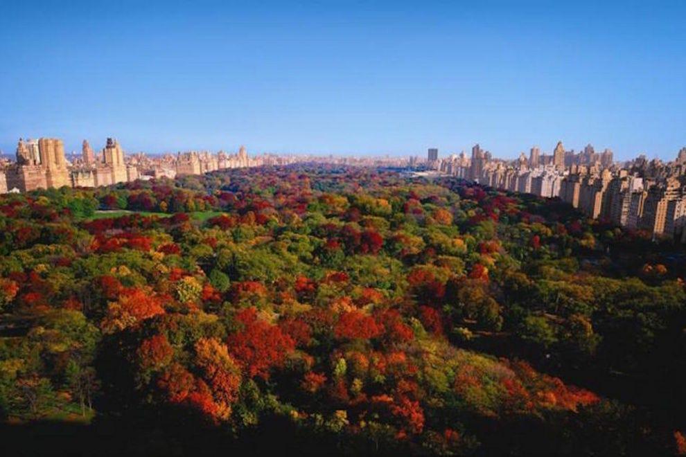 the ritzcarlton new york central park