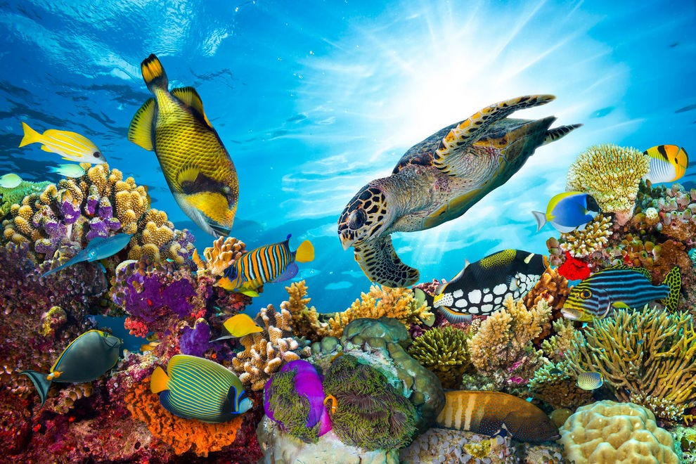 Abundant color and wildlife can be found at the Great Barrier Reef