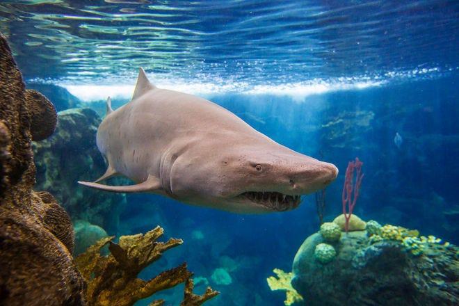 Vote Best Aquarium Nominees 2017 10best Readers 39 Choice