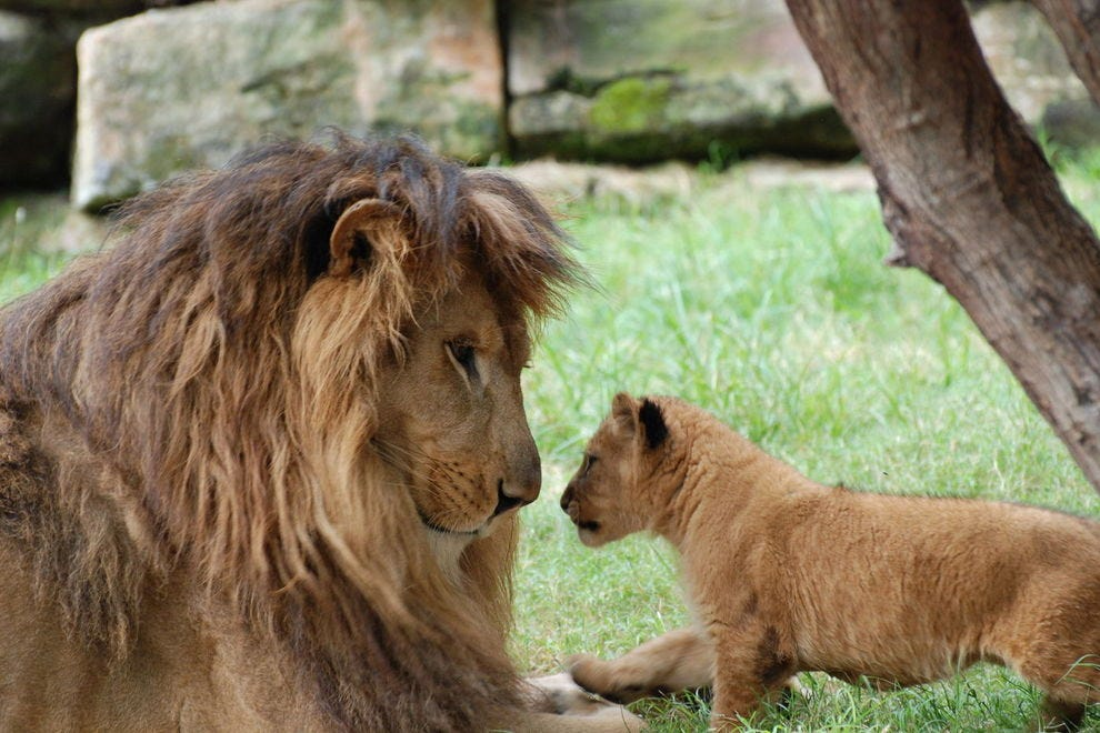 """Vote For The Fort Worth Zoo As """"Best"""" In U S  - Fort Worth"""