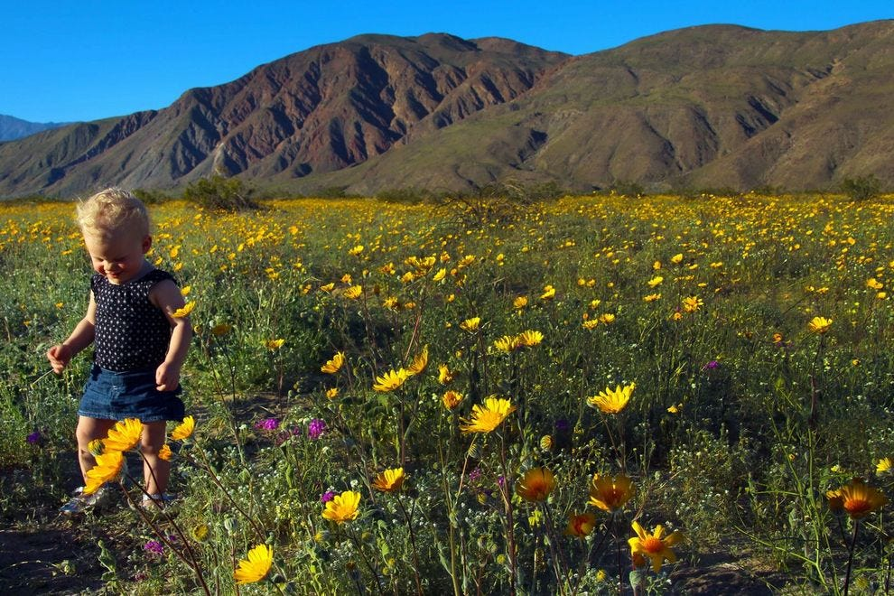 You Ve Got To See This Rare Super Bloom Of Wildflowers In