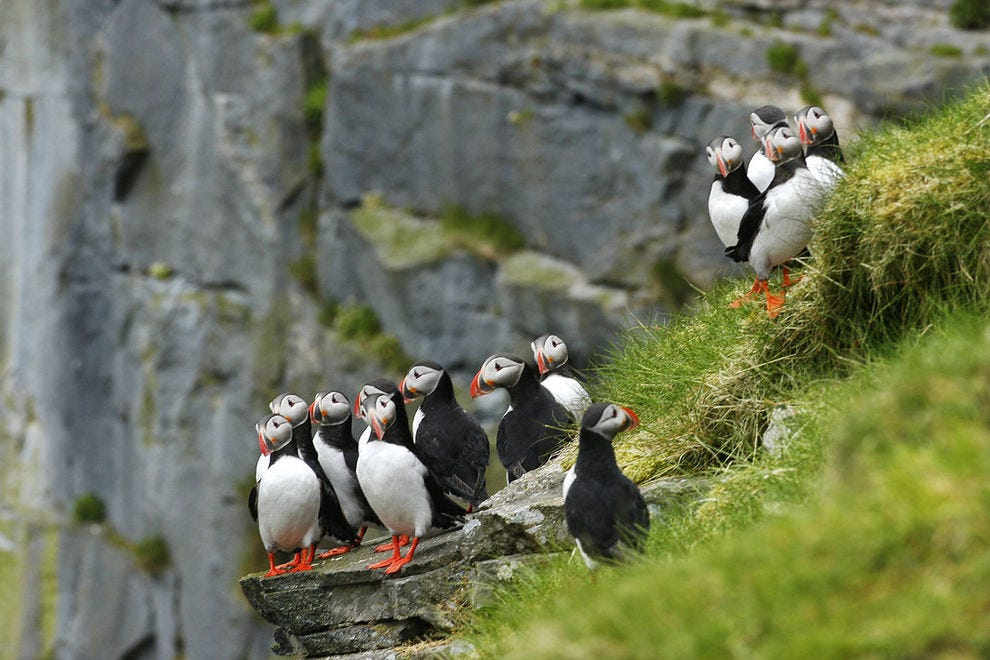 Puffins are so darn cute – find them in far northern regions best reached by cruise ships that have Norway or Alaska itineraries