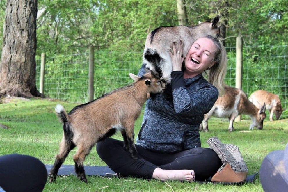 Here Are 10 Places Where You Can Do Yoga With Goats