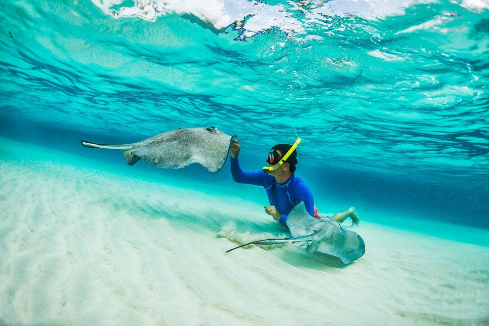 Snorkeling with stingrays in the Cayman Islands