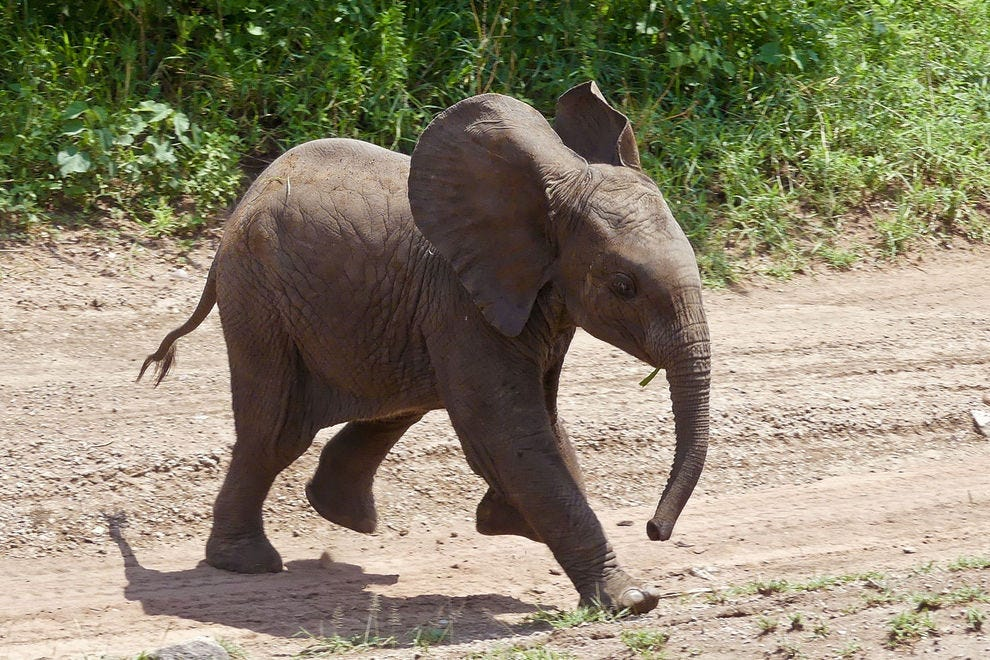 Elephants of all ages are easily spotted on game drives across Serengeti National Park