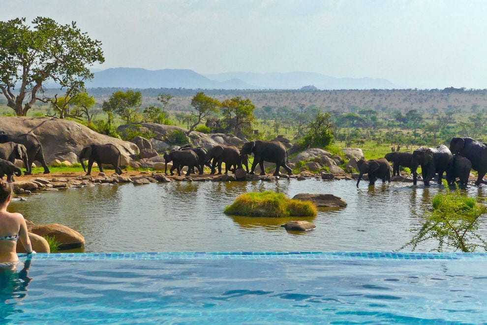 Swimming pool at Four Seasons Serengeti, overlooking a natural water hole