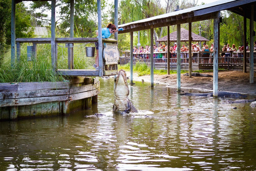 Alligator Adventure is one of the largest reptile facilities in the world
