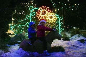 Electric Safari at the Cheyenne Mountain Zoo