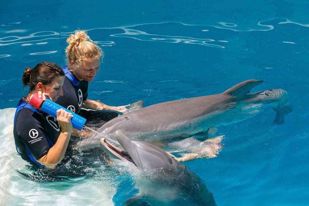 Dolphins Winter and Hope attract thousands of visitors to the Clearwater Marine Aquarium each year