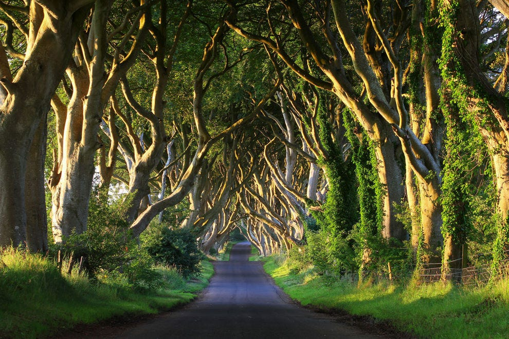 Here are 10 enchanting tree tunnels (and where to find them)