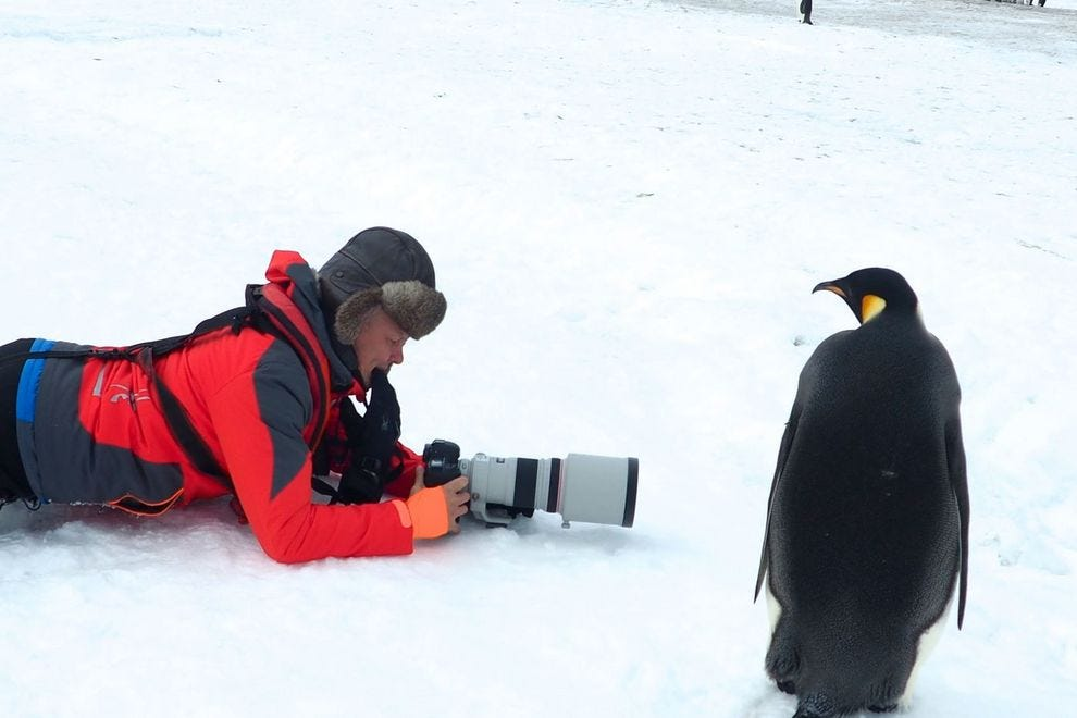 A penguin regards a photographer with as much intensity as the man behind the lens puts into photographing the colony
