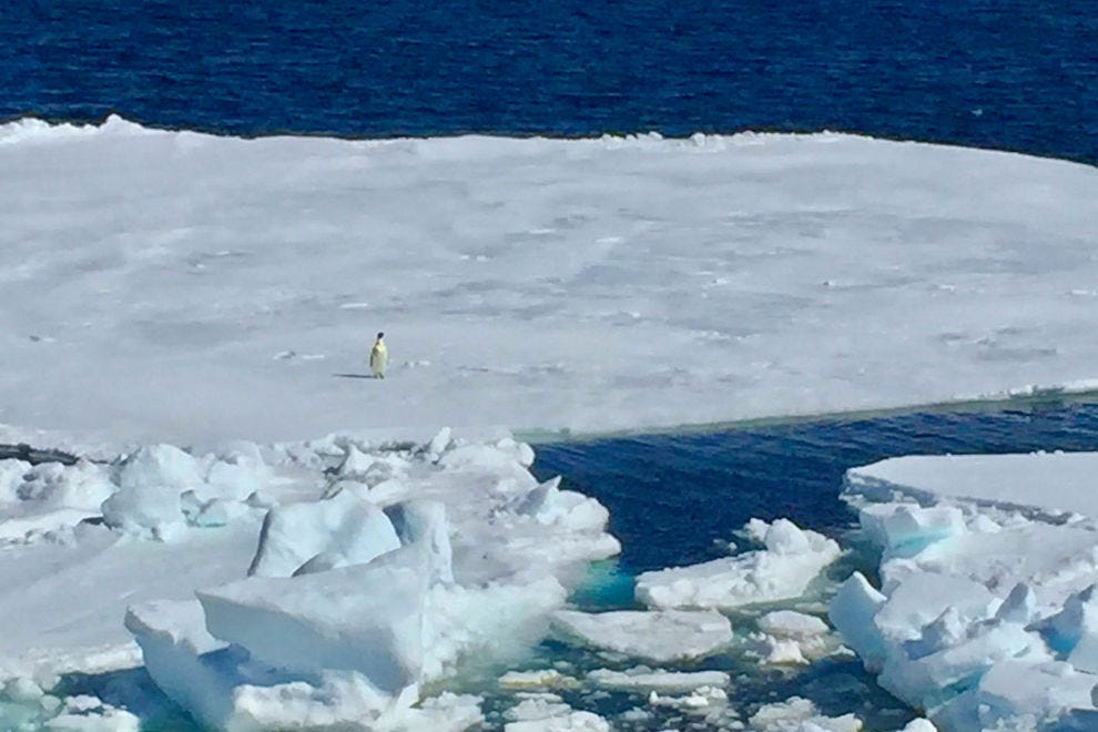 A lone Emperor penguin sails by on an ice floe. Even if we don't reach the colony on Snow Hill Island, we have now seen an Emperor penguin