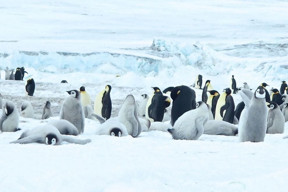 Could our ship reach the colony of Emperor penguins on Antarctica's Snow Hill Island when other expeditions had failed since 2013?