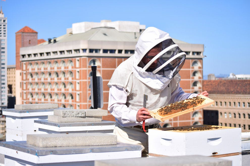 Beekeeper Roger Garrison tends to the honeybees at the Rooftop Bee Sanctuary of the Clift Hotel SF