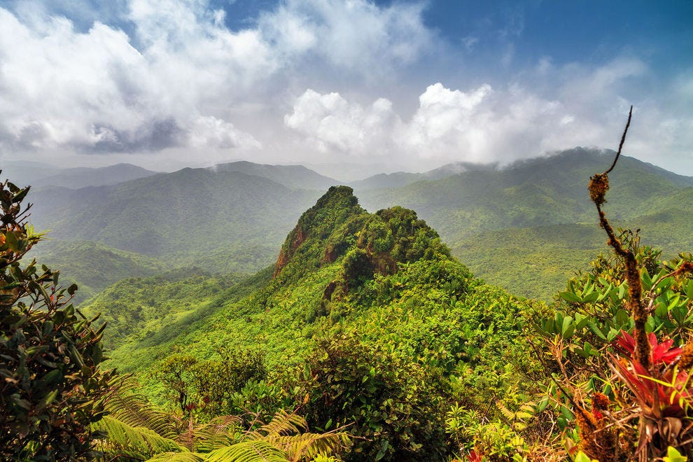 El Yunque is the only tropical rainforest in the U.S. forest system