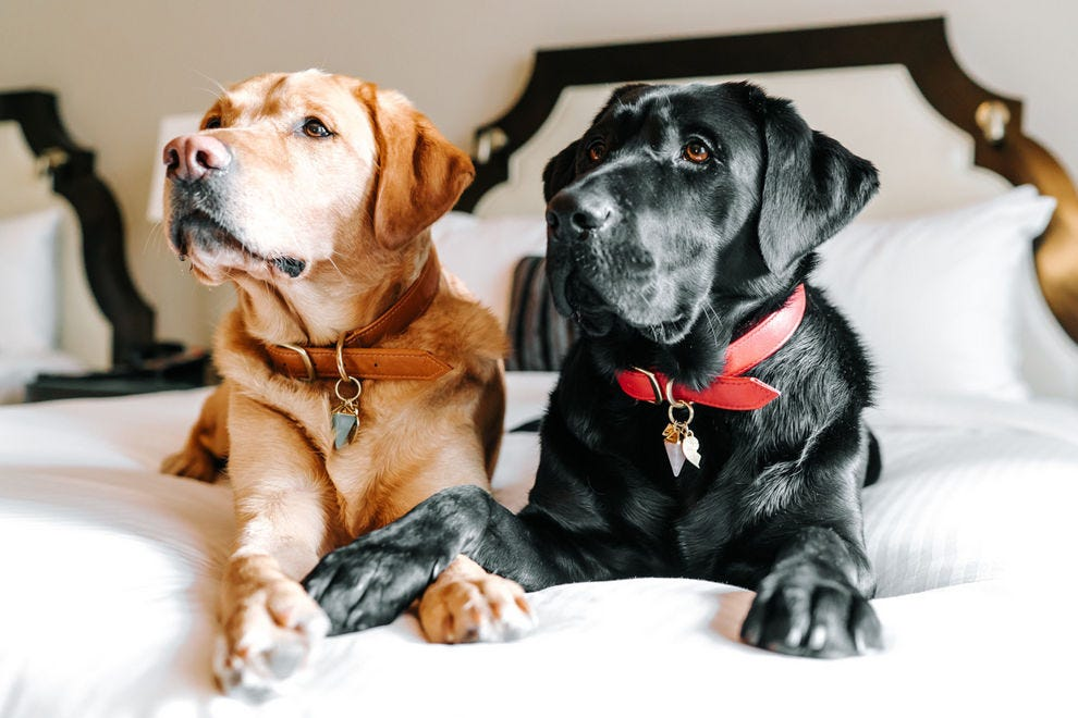 Ella and Elly are the new Canine Ambassadors at Fairmont Vancouver
