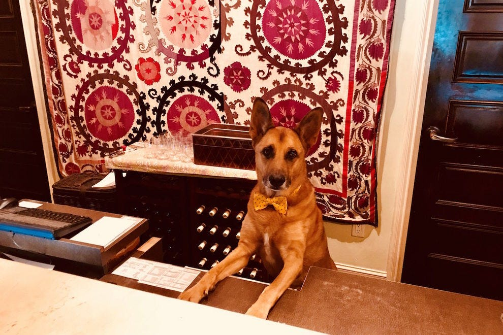 Director of Pet Relations, Wiley, at Kimpton Canary