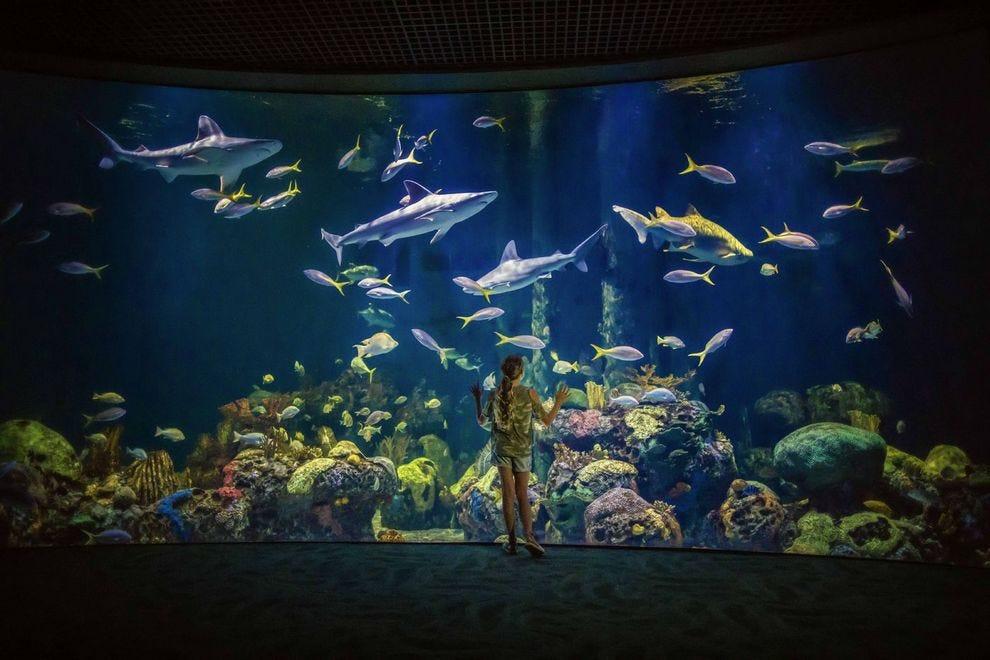 Vote - Wonders of Wildlife National Museum & Aquarium - Best Aquarium Nominee: 2018 10Best Readers' Choice Travel Awards