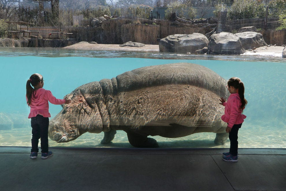 Best zoo exhibit winners 2018 10best readers choice travel awards dallas zoo malvernweather Image collections