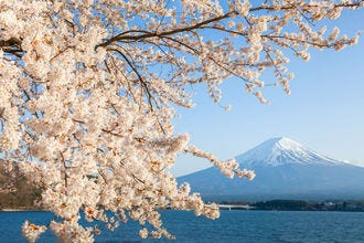 10 places to see beautiful cherry blossoms (and when)