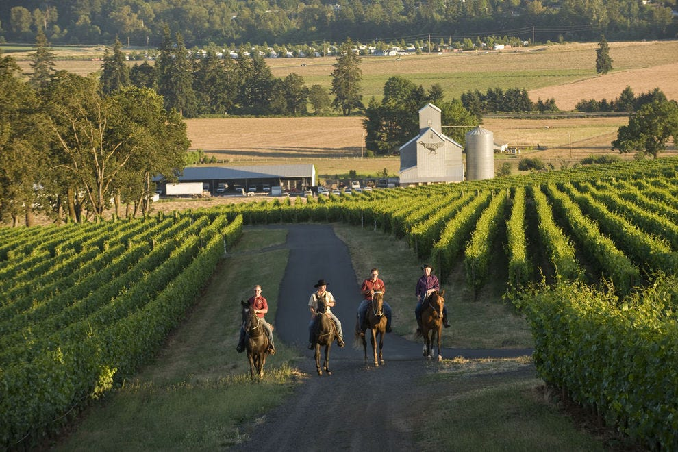 Experience Oregon's Dundee Hills on your own horse (or via carriage ride)