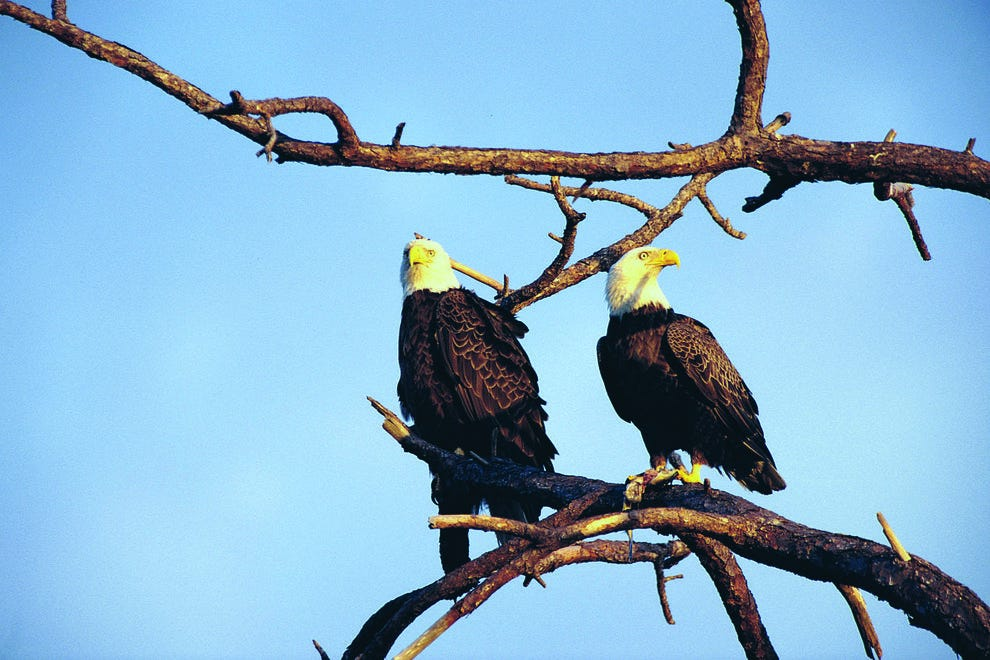 "Bald eagles ""honeymoon"" here, too – it's a nesting ground"