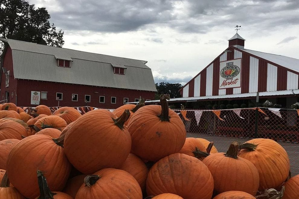 Sauvie Island Pumpkin Patch Portland Attractions Review
