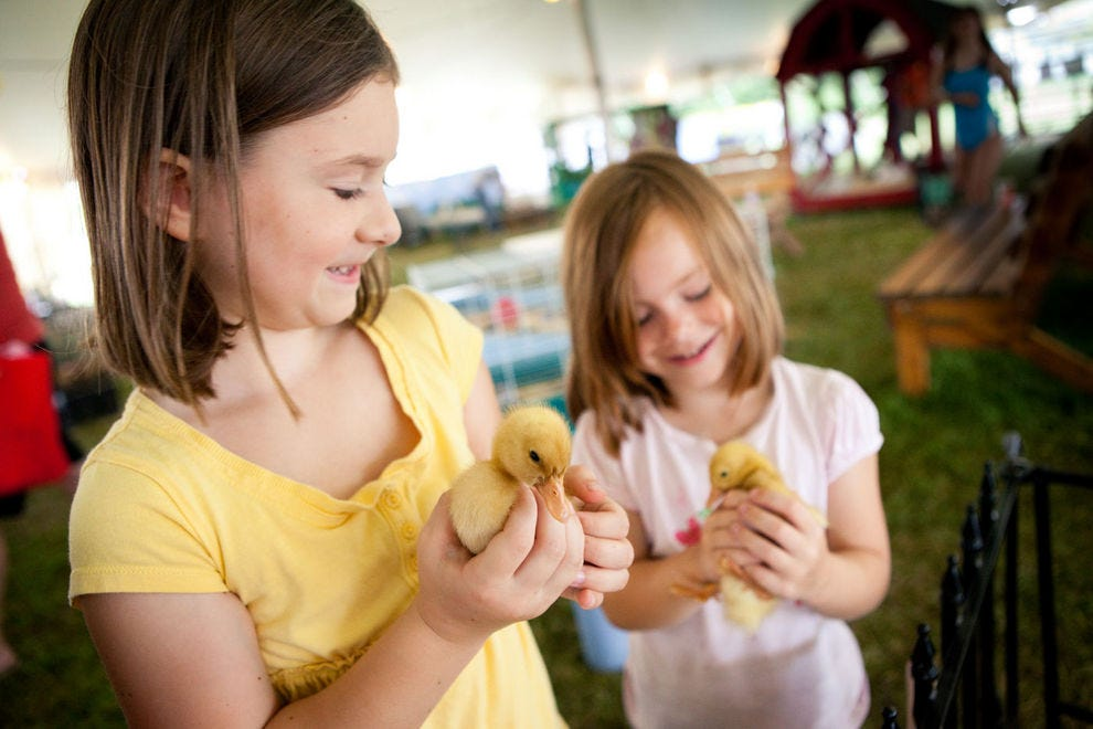 Fuzzy ducklings at the fair