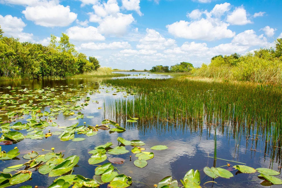 Everglades National Park is full of interesting flora and fauna
