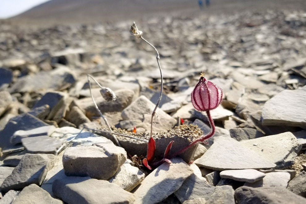 A small plant peeks through the sharp rocks of Maxwell Bay