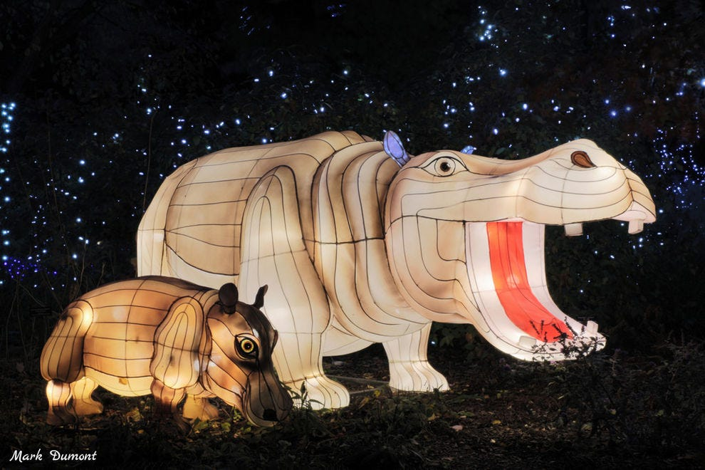 Best Zoo Lights Winners 2018 10best Readers Choice