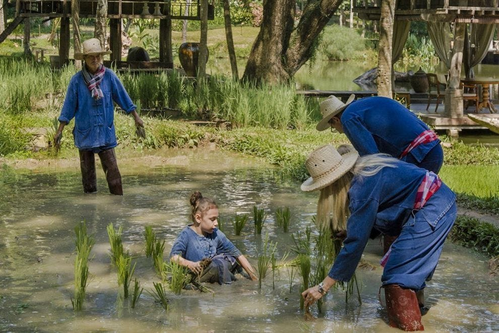 Rice planting is a signature activity at Four Seasons Resort Chiang Mai