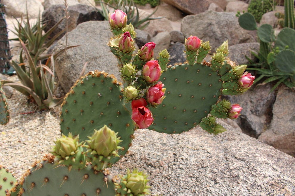 Spring is a beautiful time to visit the Cactus Garden at The Phoenician
