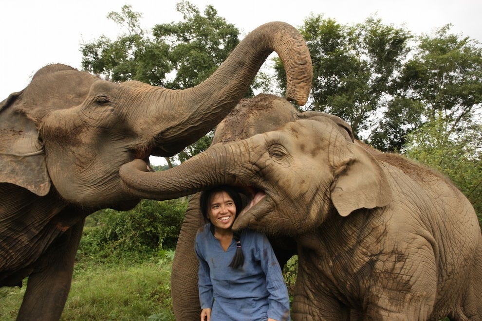 Lek Chailert with her beloved babies at Elephant Nature Park