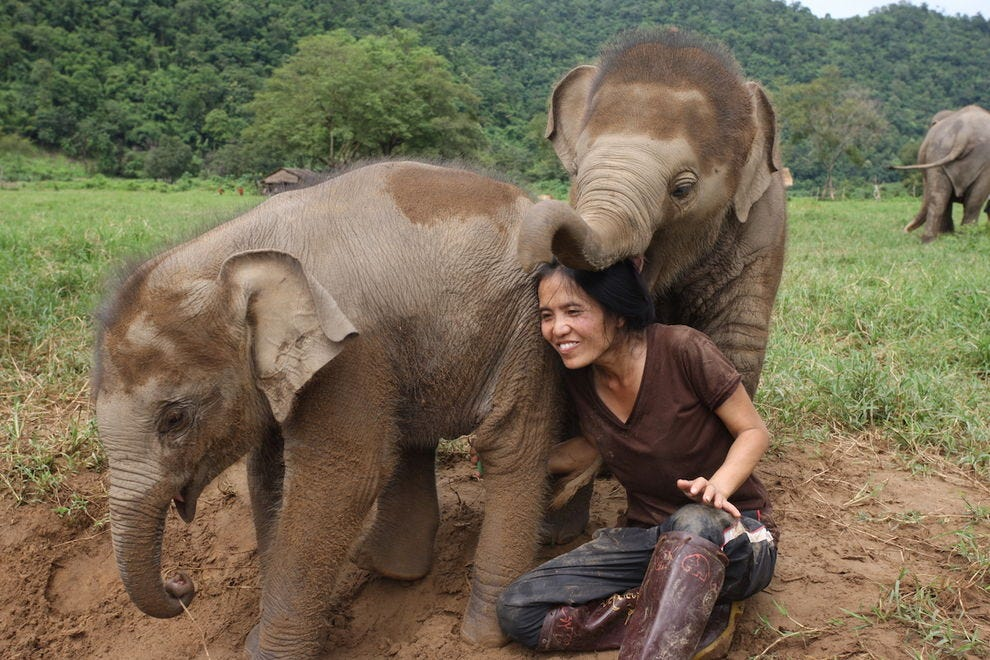 Lek Chailert continues to fight for ethical elephant tourism.