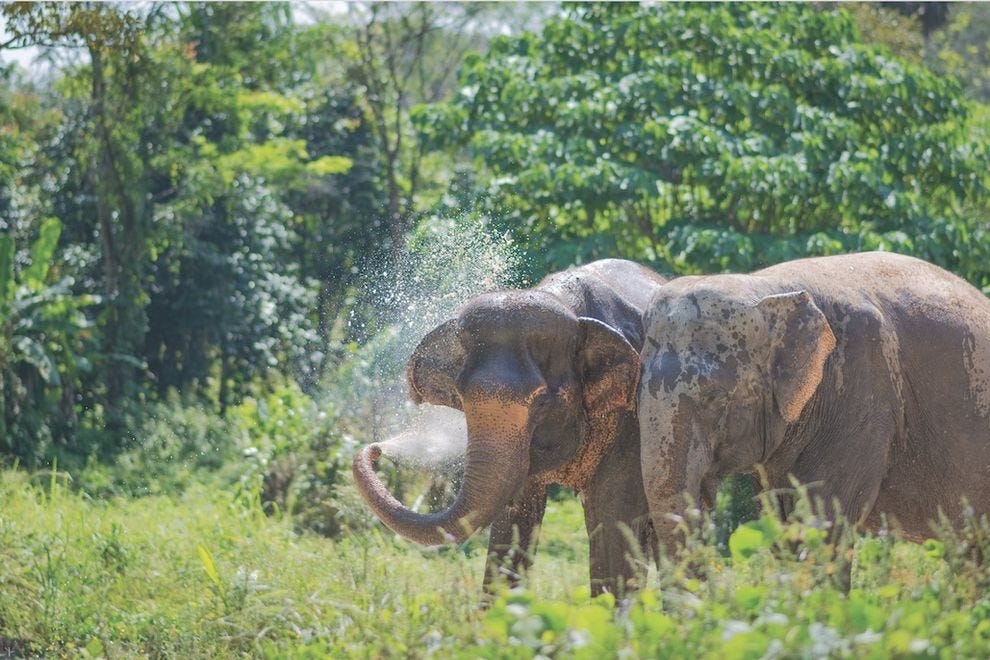 Phuket Elephant Sanctuary is the only ethical elephant sanctuary on the island of Paklok