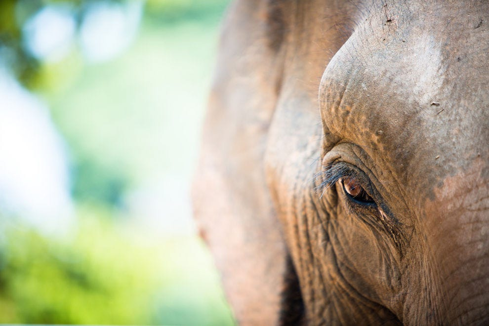 See inside the soul of a rescued elephant at Samui Elephant Sanctuary